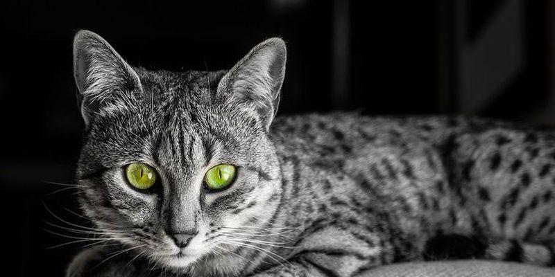 Казнь из-за кошек в Древнем Египте!