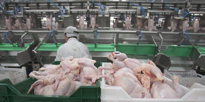 В Україні знайшли сальмонелу в польській курятині
