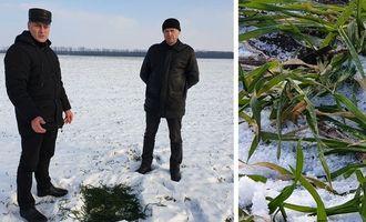 На Кіровоградщини посіви озимих можуть загинути від морозу