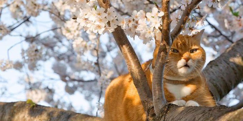 В Украине наступает настоящая весна: синоптики порадовали прогнозом погоды