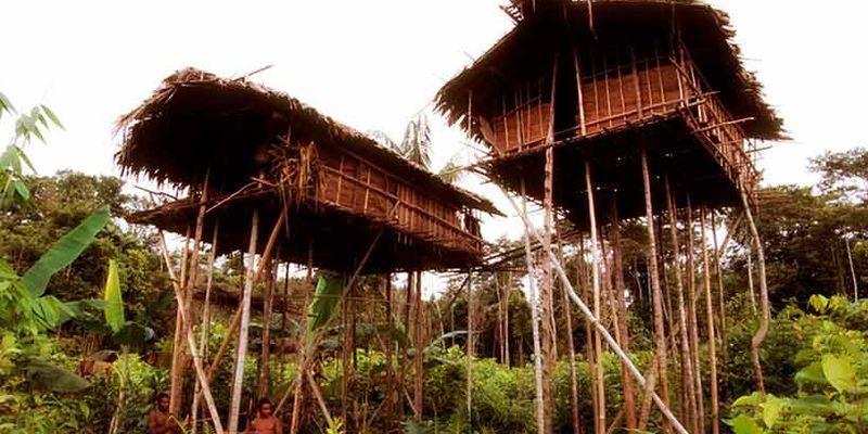 Племя которое живет на деревьях: кто они?