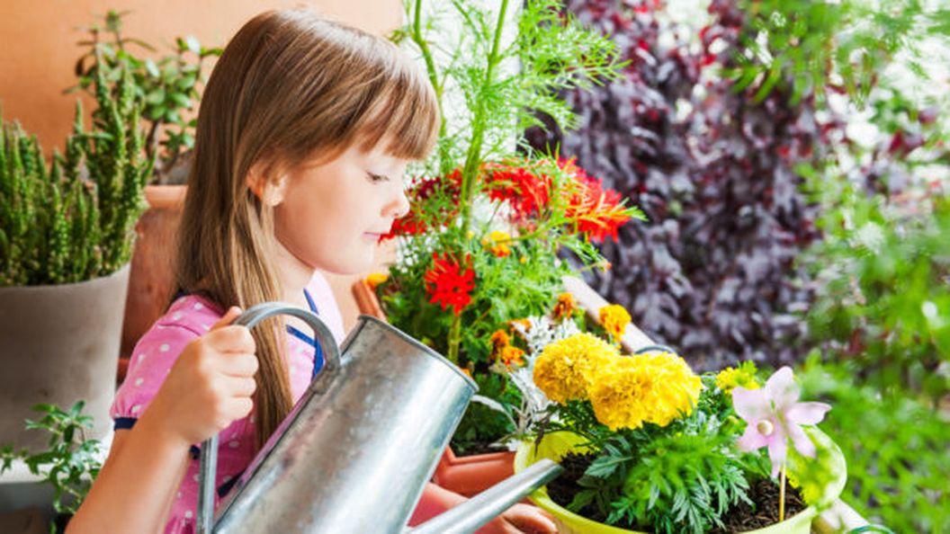 Комнатные цветы, которые лечат: природные анальгетики и анестетики