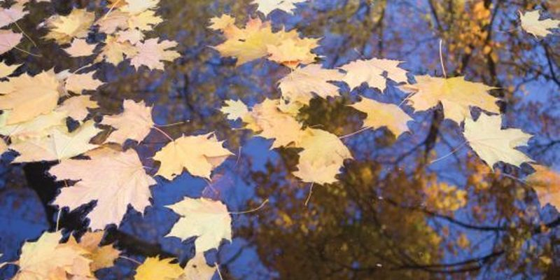 Метеорологічне літо закінчилось: на яку осінь чекати українцям
