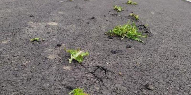 Под Днепром трава проросла сквозь новый асфальт