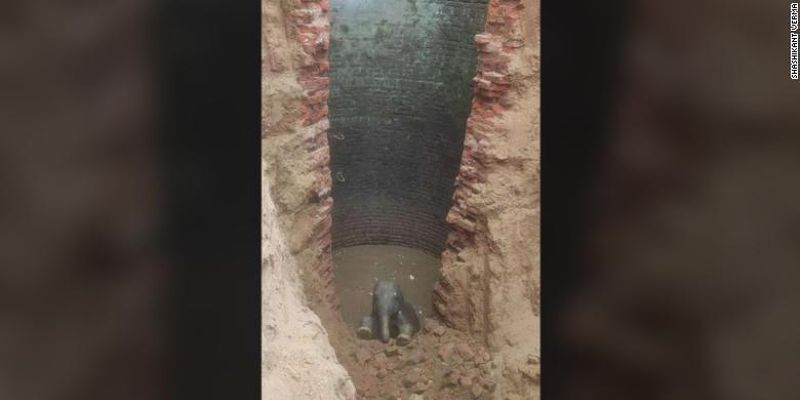 В Индии спасли маленького слоненка, провалившегося в колодец на глубину 9 метров