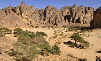 Искусственный интеллект нашел в пустыне Сахара около 2 миллиардов деревьев