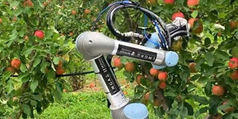 Створили робота, який заміняє робітків у садку