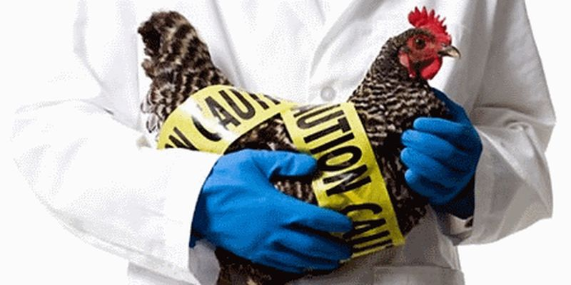 Экс-сотрудница института биотехнологий вынесла из него опасный штамм птичьего вируса, - Офис генпрокурора