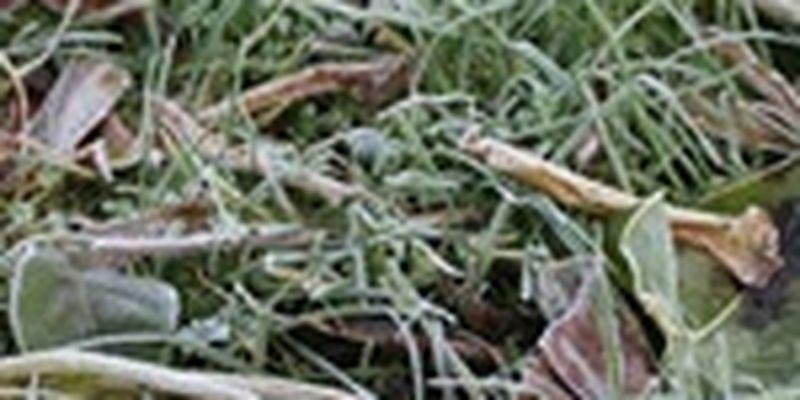 На смену заморозкам в Украину придет волна потепления