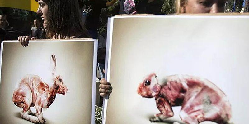 Израиль стал первой страной, запретившей использование меха в модной индустрии