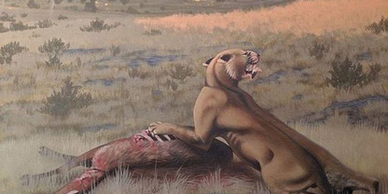 Ученые воссоздали облик саблезубого кота, жившего 9 млн лет назад - весил почти 300 кг: фото