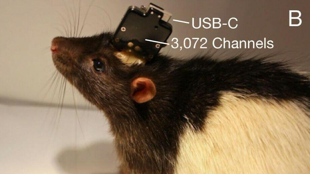 Компания Илона Маска показала «нити», которые позволяют вживлять чипы в мозг и считывать информацию