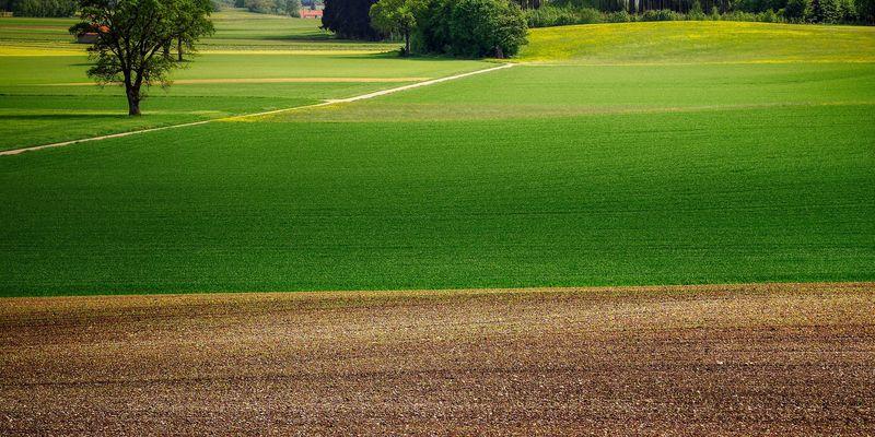 Нардепи пропонують продовжити заборону відчуження сільськогосподарських земель до 2023 року