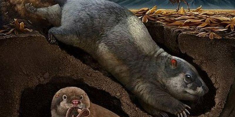 Ученые нашли неизвестные ранее виды животных - жили в Китае 120 млн лет назад: фото