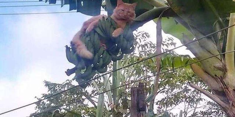 Когда котов обнаружили там, где их не должно было быть. Курьезные фото