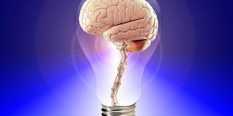 В биочипе вырастили мини-мозг