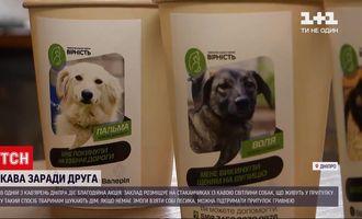 В кафе в Днепре волонтерам помогают найти владельцев для собак