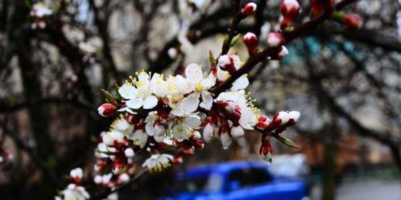 Наслідки квітневих морозів: дешевих ягід не буде