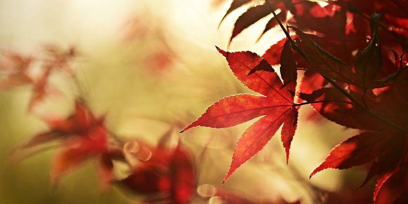 Праздник 18 октября: главные приметы и что нельзя делать в этот день