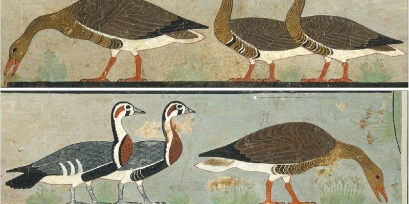 Ученые идентифицировали вымерший вид гуся по картине, нарисованной в древнеегипетской гробнице