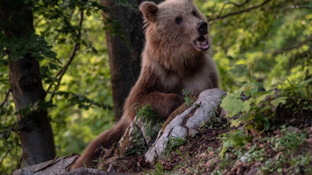 В национальном парке в Теннесси сняли медведицу, припугнувшую человека