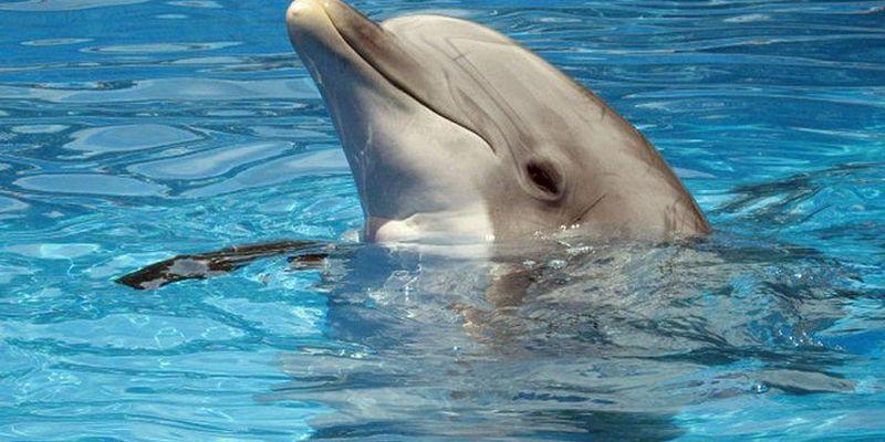 Американские инженеры создали робота-дельфина