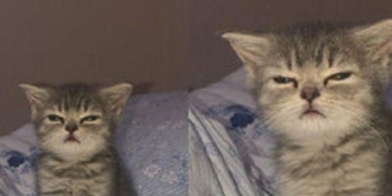 Котенок с осуждающим взглядом прославился на весь мир