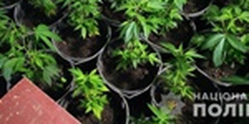 На Черниговщине выращивали элитную коноплю и галлюциногенные грибы