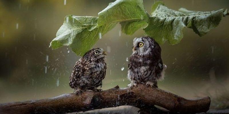 Где на Земле никогда не шёл дождь?