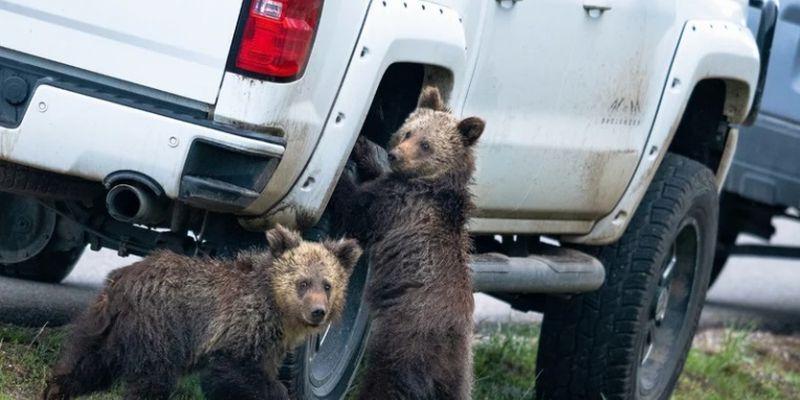 Самые смешные фото животных по версии Comedy Wildlife Photography