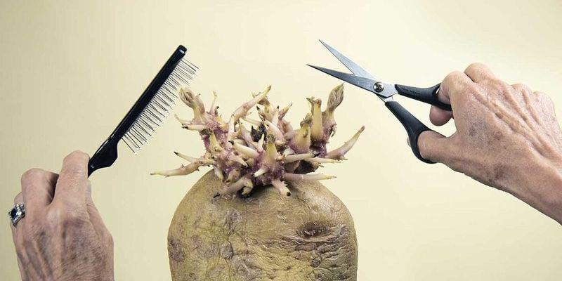 """""""Картофель в парикмахерской"""" победил на британском конкурсе"""