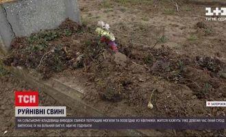В Запорізькій області свині перерили місцеве кладовище: жителі поскаржились на власника