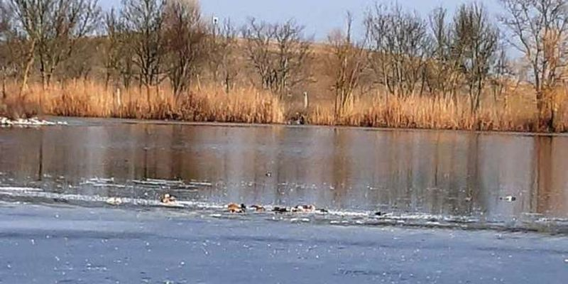 Масова гибель птахів у «Асканія-Нова»: спеціалісти почали розслідування