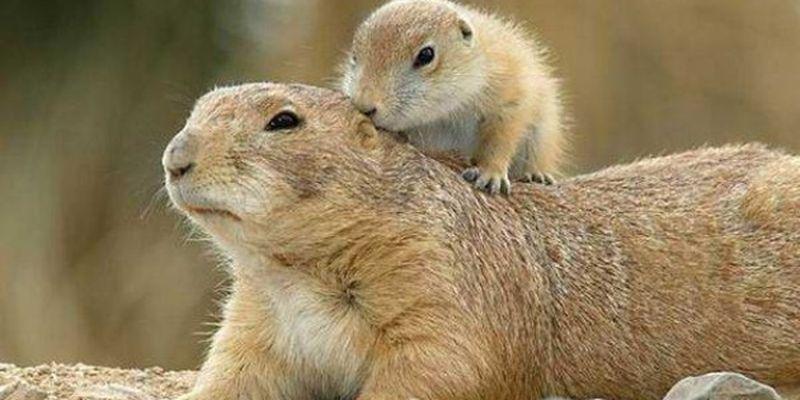 В Красную книгу Украины попал 171 новый вид животных