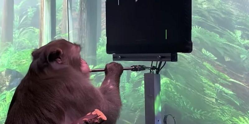 Обезьяна и пинг-понг. Neuralink Илона Маска показал новую версию интерфейса мозг-машина