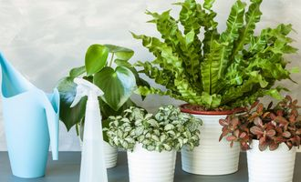 8 натуральных удобрений для комнатных цветов