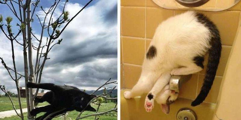 Смешные фото котеек, на которых не действуют гравитация