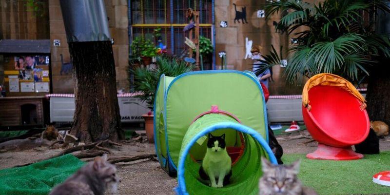 Питомцы умерших от коронавируса: в Испании для бездомных кошек открыли приют