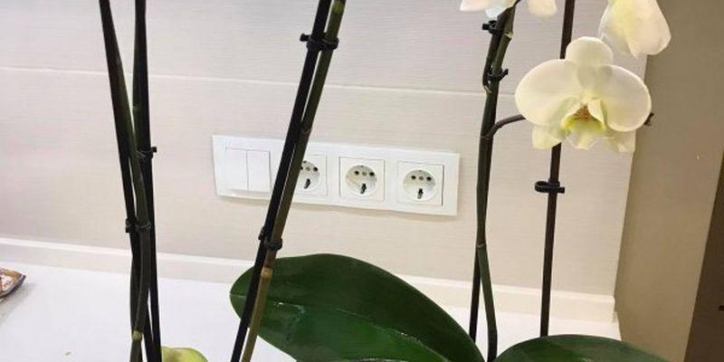 Як врятувати орхідею від грибка