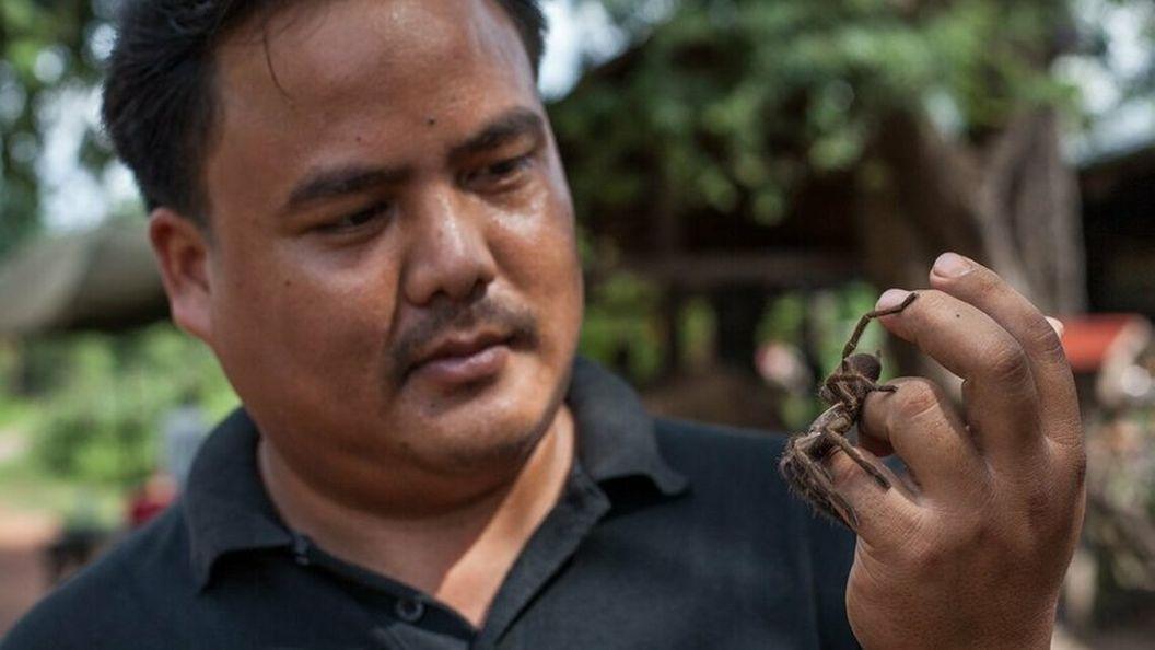 Камбоджа: стоит ли есть тарантула и как это правильно делать?
