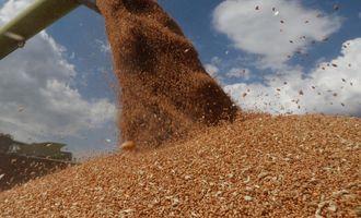 Индия рассчитывает на рекордный урожай зерновых - прогноз