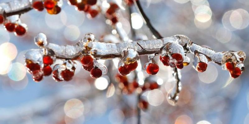Будет по-весеннему тепло: появился актуальный прогноз погоды на начало недели в Украине
