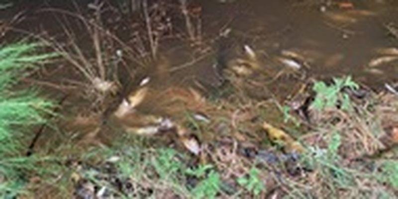 В Австралии погибли сотни тысяч рыб