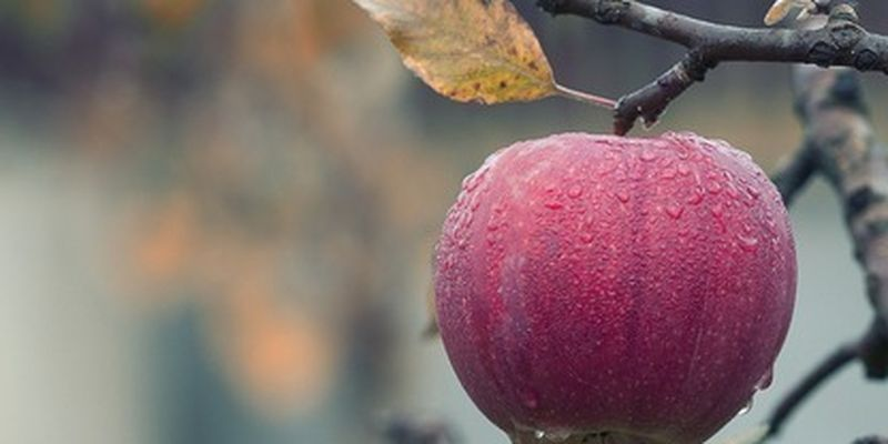 Без дешевых фруктов: каким будет урожай после апрельских морозов