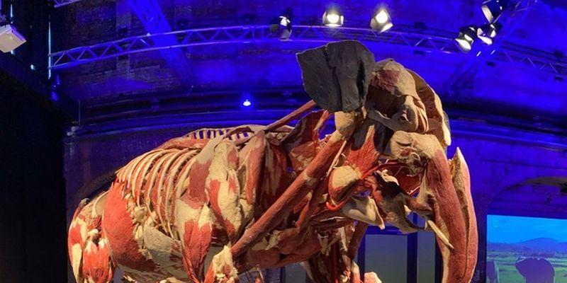 """Долгожданное возвращение шокирующей выставки настоящих тел — """"Всесвіт тіла: Всередині тварин"""""""
