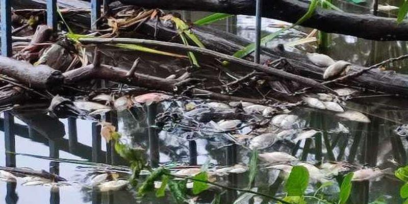 У столичному парку на ставках масово загинули птахи та риба
