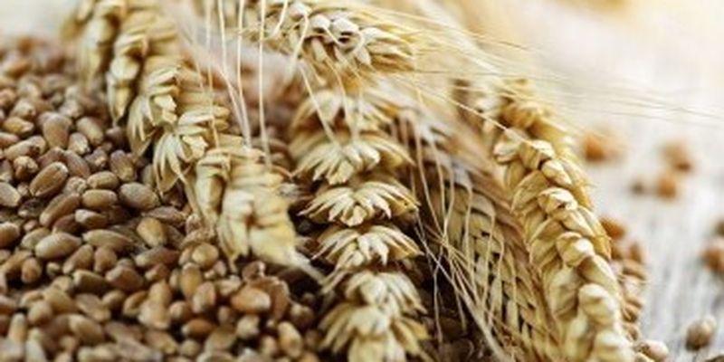 Украина отправила на экспорт более 36 млн тонн зерновых