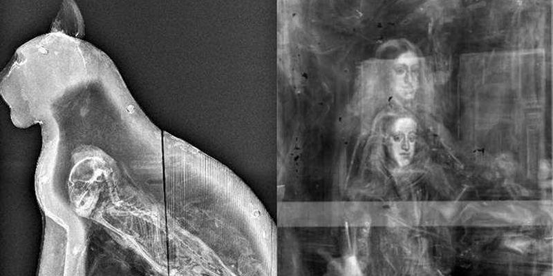 Подборка рентгеновских снимков, которые наглядно показывают, что от нас скрывает природа